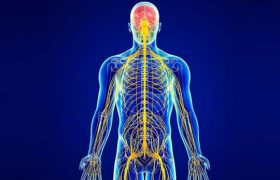 Периферическая нервная система – просто о стороении и работе