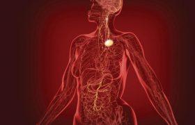 Блуждающий нерв: ключ к гармонии и здоровью