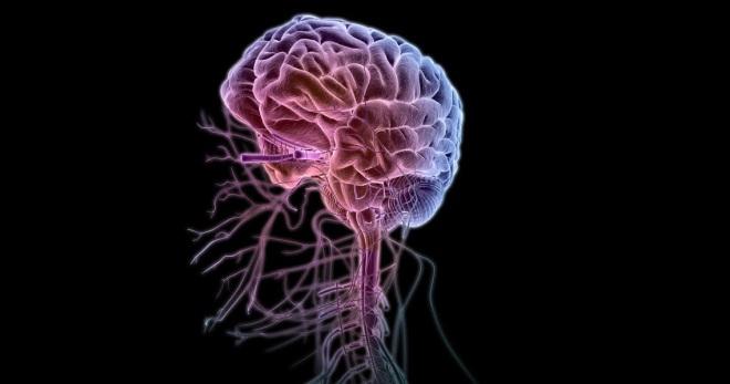 Черепно-мозговые нервы – как они устроены и работают?