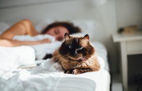 Язык тела во сне: проверьте, о каких психологических проблемах говорит ваша поза