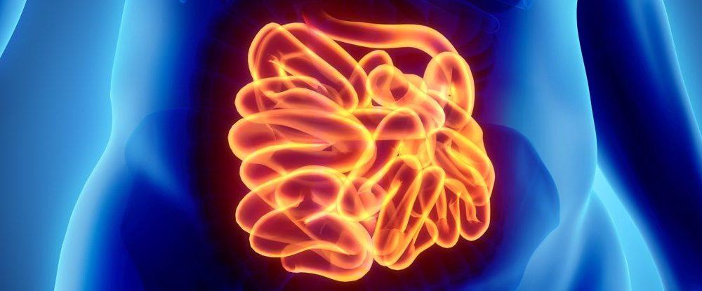 Энтеральная нервная система