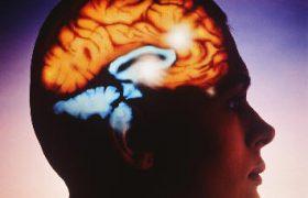 Выявлен механизм самовосстановления мозга после инсульта